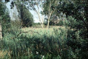 Riserva Naturale Orientata di Alfonsine